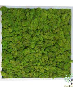 دیوار سبز مصنوعی خزه ای