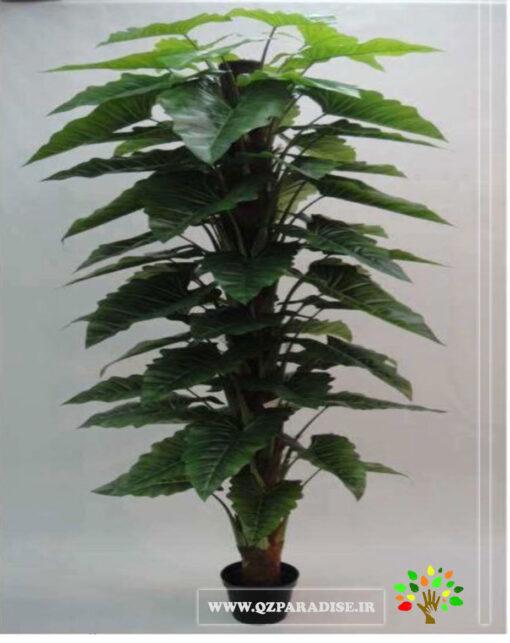 درختچه مصنوعی آلوکازیا (باباآدم)