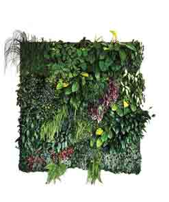 دیوار سبز و بام سبز
