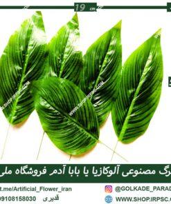 پارتیشن برگ مصنوعی با برگ مصنوعی پاپاآدم (آلوکازیا)