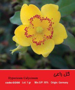 بذر گل راعی Hypericum perforatum