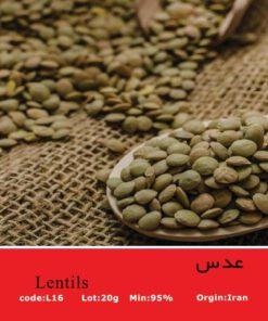 بذر عدس سبز Green Lentils