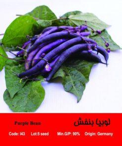 بذر لوبیا بنفش Purple Bean