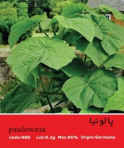 بذر درخت پالونیا Paulownia