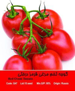 بذر گوجه تخم مرغی قرمز درختی Red Ovun Tomato