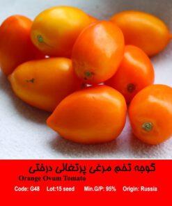 بذر گوجه تخم مرغی پرتغالی Orange Ovum Tomatoدرختی