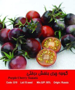 گوجه چری بنفش درختی Purple Cherry Tomato