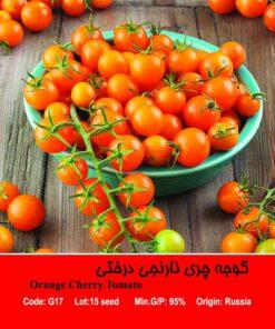 بذر گوجه چری نارنجی درختی Orange Cherry Tomato