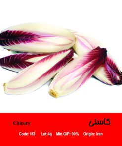 بذر گیاه کاسنی Chicory