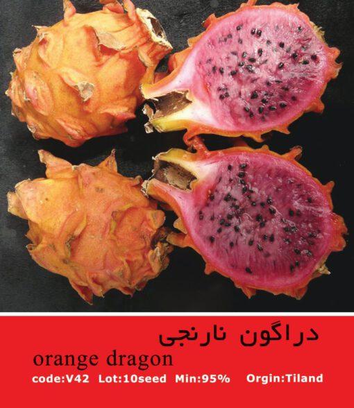 بذر میوه دراگون نارنجی