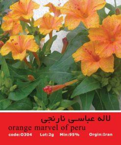 بذر گل لاله عباسی نارنجی (Orange Mirabilis jalapa)
