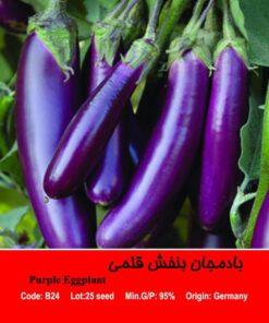 بذر بادمجان بنفش قلمی Purple Eggplant