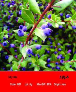 بذر درختچه مورد Myrtle