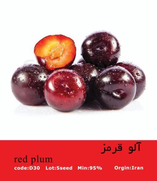 بذر درخت آلو قرمز Red Plum