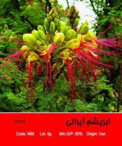بذر درخت ابریشم ایرانی