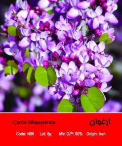 بذر درخت ارغوان Cercis Siliquastrum
