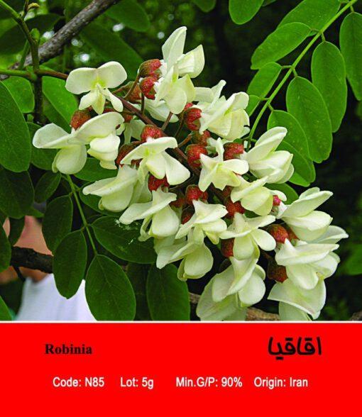 بذر درخت اقاقیا Robinia