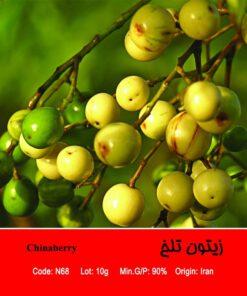 بذر درخت زیتون تلخ Chinaberry