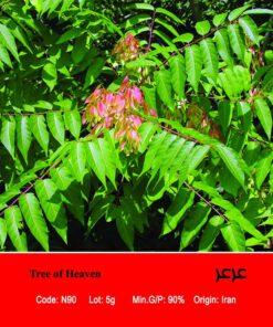 بذر درخت عرعر Tree Of Heaven