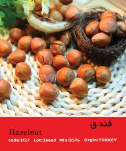 بذر درخت فندق Hazelnut