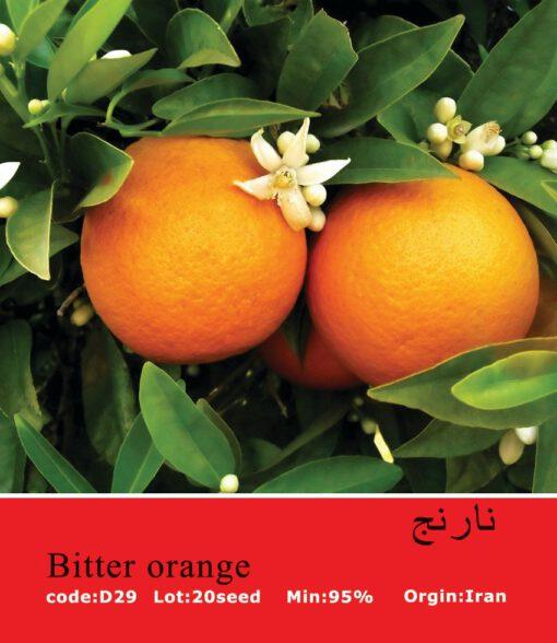 بذر درخت نارنج Bitter Orange
