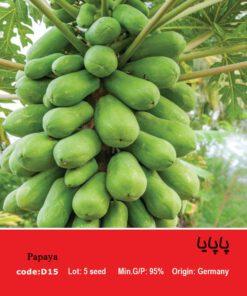 بذر درخت پاپایا Papaya