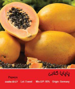بذر درخت پاپایا گلابی Papaya