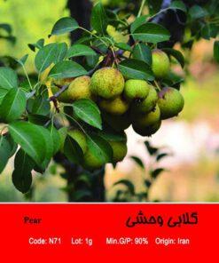 بذر درخت گلابی وحشی Pear