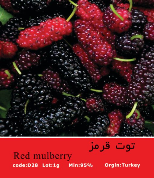 بذر درخت توت قرمز Red Mulberry