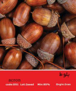 بذر میوه بلوط Acron