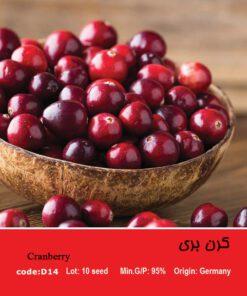 بذر میوه کرن بری Cranberry