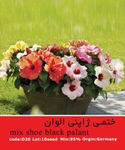 بذر گل ختمی ژاپنی الوان Mix Shoe Black Palant