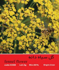 بذر گل سیاه دانه Fennel Flower