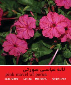 بذر گل لاله عباسی صورتی Pink Mavel of Perua
