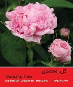 بذر گل محمدی Damask Rose