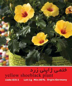 بذر گل ختمی ژاپنی زرد Yellow Shoeblack Plant