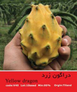 بذر گیاه دراگون زرد Yellow Dragon