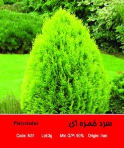 بذر درخت سرو خمره ای Platycladus