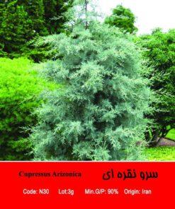 بذر درخت سرو نقره ای Cupressus Arizonica