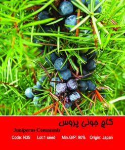 بذر درخت کاج جونی پروس Juniperus Communis