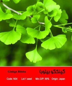 بذر درخت گینکگو بیلوبا Ginkgo Biloba