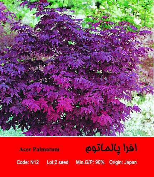 بذر درخت افرا پالماتوم Acer Palmatum