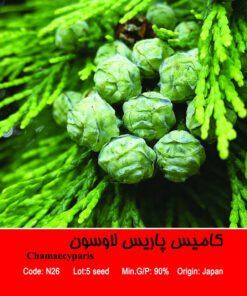 بذر درخت کامیس پاریس لاوسون Chamaecyparis