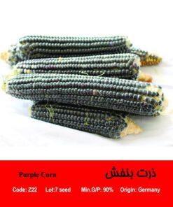 بذر ذرت بنفش Purple Corn