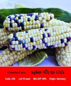 بذر ذرت رنگی میکس Colorful Corn