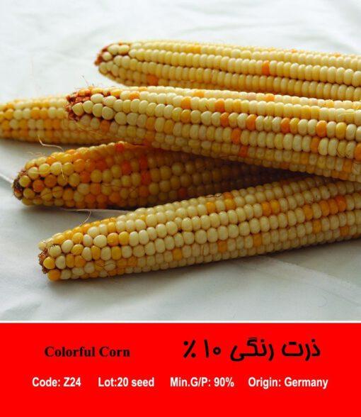 بذر ذرت رنگی 10 درصد Colorful Corn