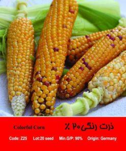 بذر ذرت رنگی 20 درصد Colorful Corn