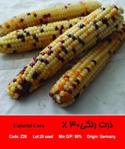 بذر ذرت رنگی 30 درصد Colorful Corn
