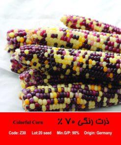 بذر ذرت رنگی 70 درصد Colorful Corn