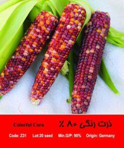 بذر ذرت رنگی 80 درصد Colorful Corn